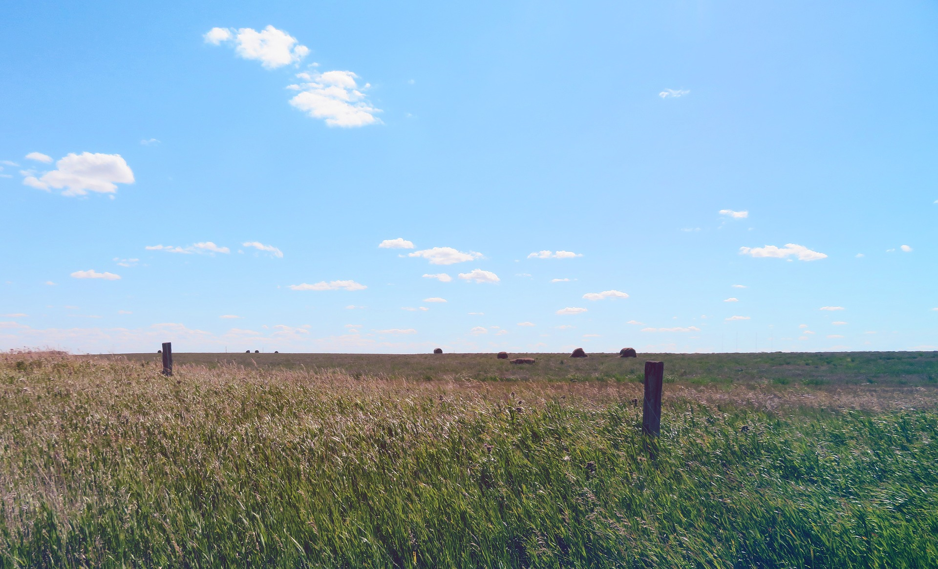 Legal Challenges to the Government of Saskatchewan's Proposed Sell-Off of Public Pastures