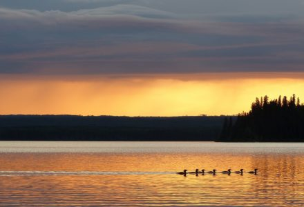 Quill Lakes Watershed Association and Freedom of Information