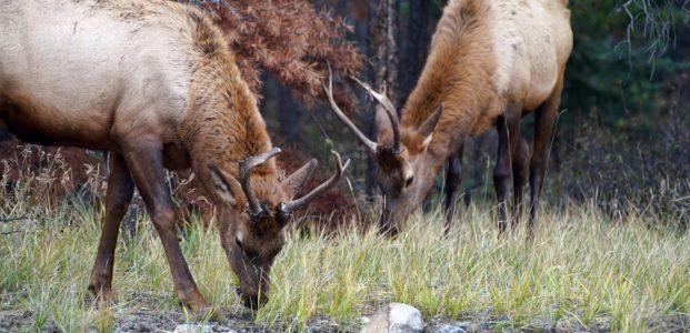 Saskatchewan Woodland Caribou Range Plan